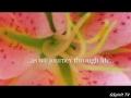IndiaJiva - Om Namah Shivaya - Music for a peaceful planet